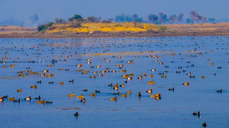 Participatory  Jagadishpur  wetland